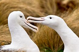 Australasian Seabird Group